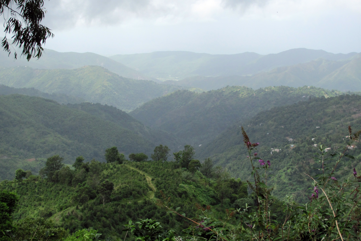 Photo of the Blue Mountains in Jamaica