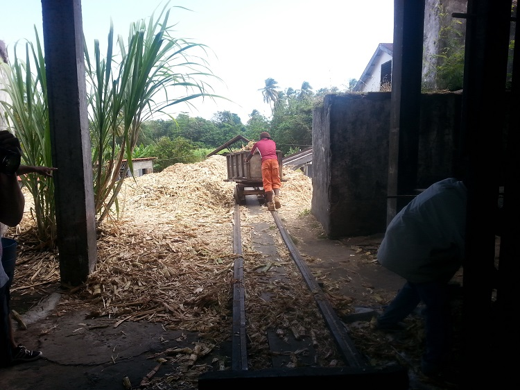 Photo of worker pushing crushed sugarcane on a rail track at River Antoine Rum Distillery